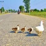 10 Dhur Land For Sale in Chatar, Kohalpur Banke