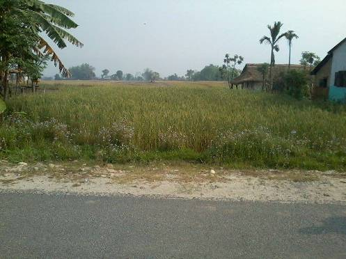 9 Kattha, 12 Dhur Land For Sale Madi kirtanpur, Chitwan
