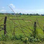 17 Dhur land For sale Near Banbatika, Shankar Nagar
