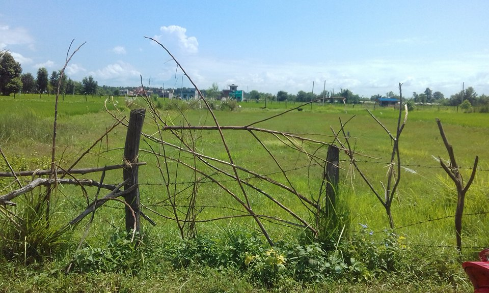 land near banbatika for sale