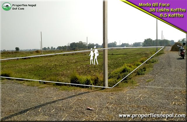 Featured6.5 kattha Land For Sale in Padsari, Bhairawaha